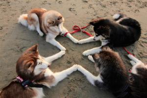 dogstouchingpaws