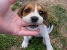 puppynipping