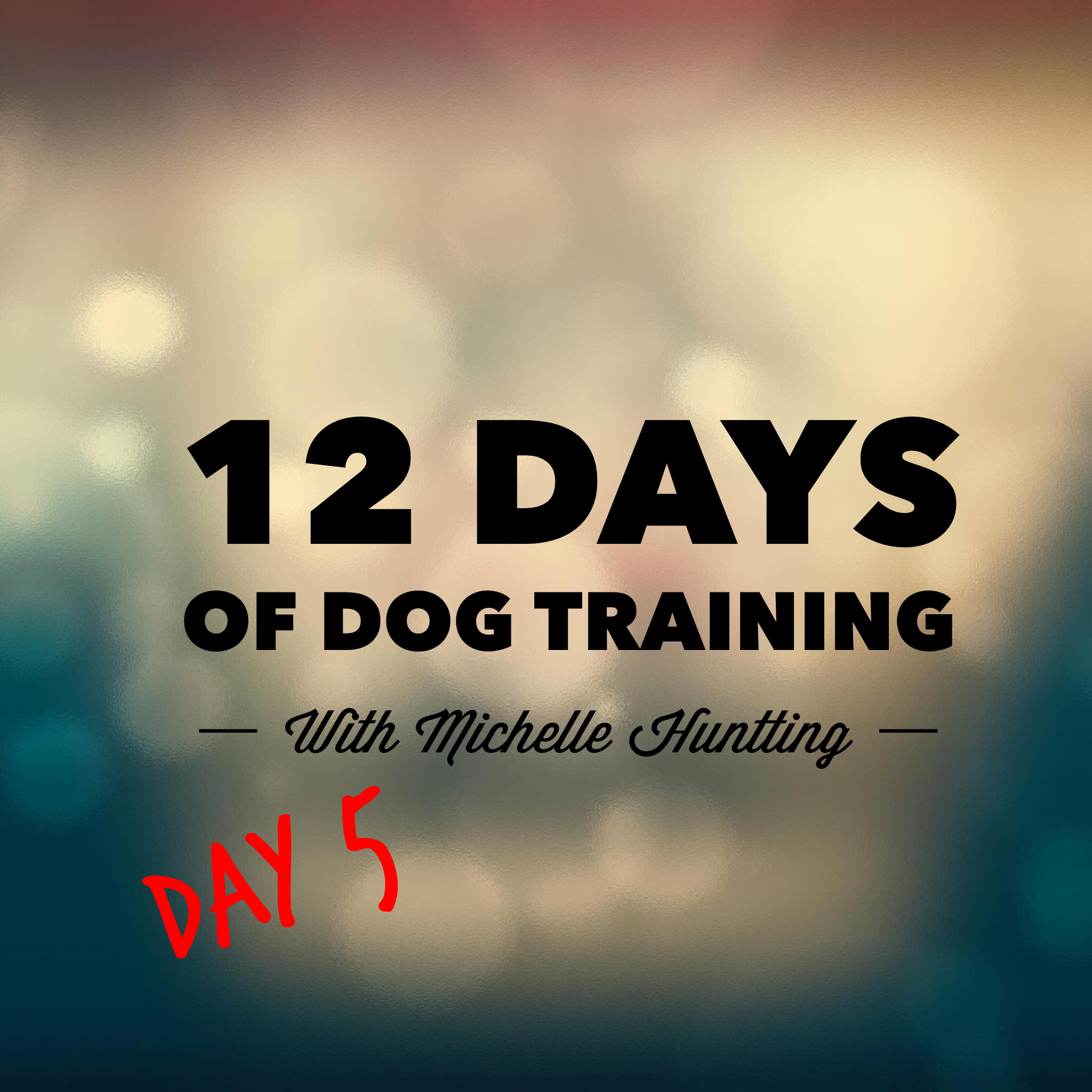 Twelve Days Of Dog Training Day 5 Austin Dog Trainer